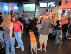 lucky dog bar